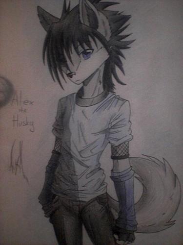Collab; Alex the Husky