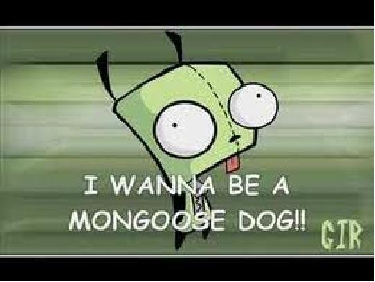 Gir monggoose