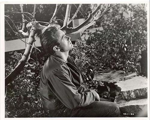Jimmy sitting near a pokok