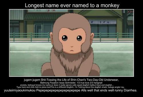 Longest monkey name