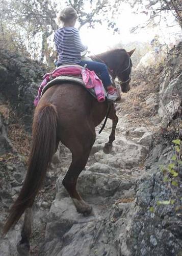 Michelle Williams & Matilda in Mexiko - (January 2012)