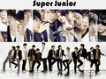 super junior - super-junior photo