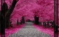 Blossom Forest - fantasy wallpaper
