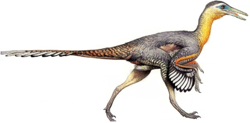 恐龙 壁纸 entitled Buitreraptor