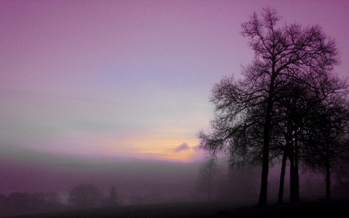 ndoto purple morning