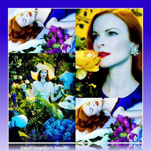 Marcia Cross- Perfect<3