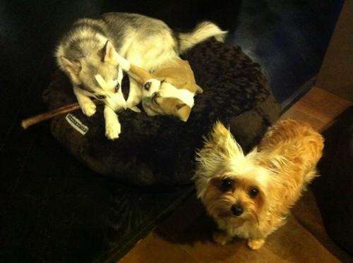 Miley 's Pet Ziggy,Lila,Floyd
