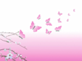 Pink Butterflies - yorkshire_rose wallpaper