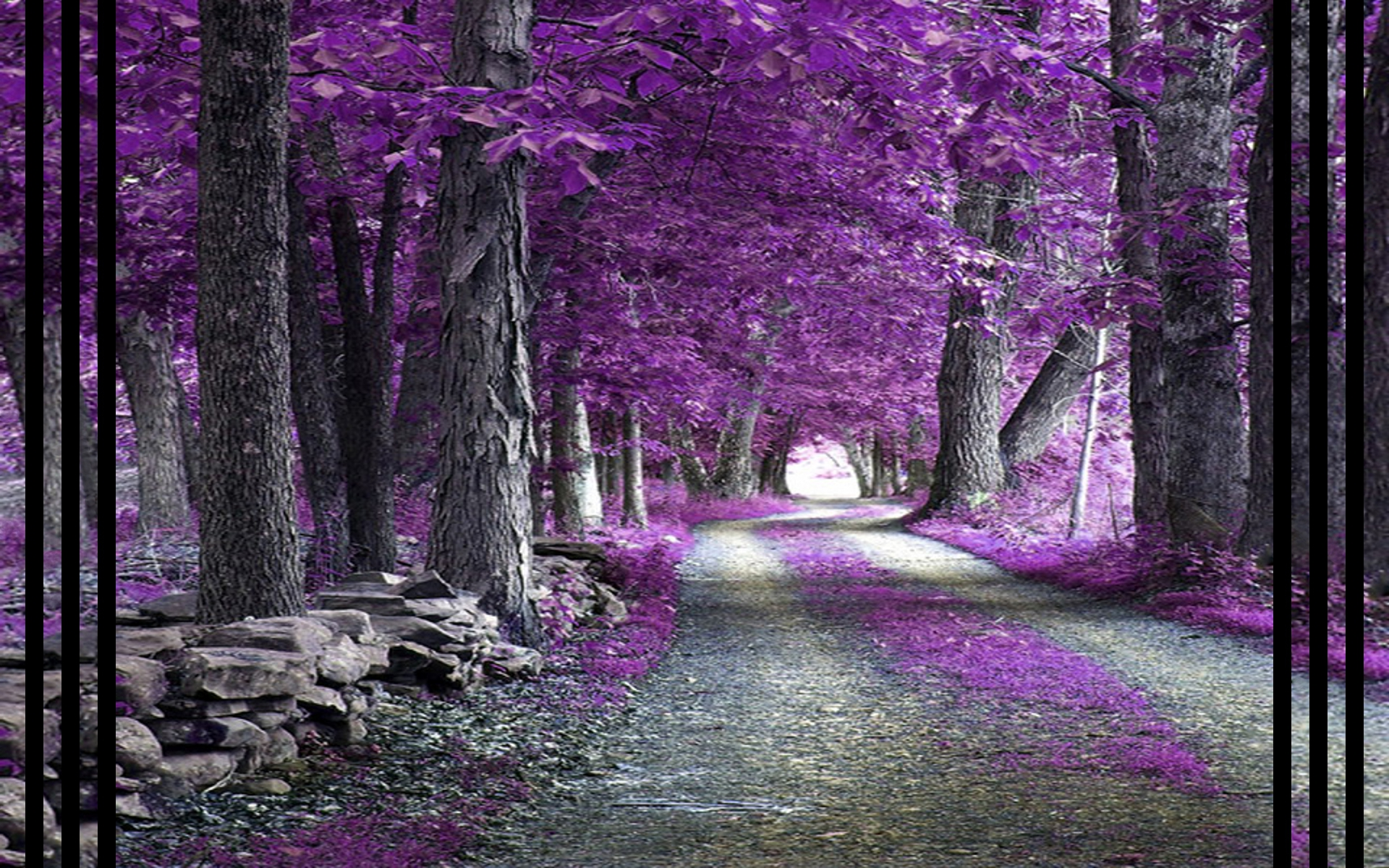 Purple Forest Fantasy Desktop And Mobile Wallpaper