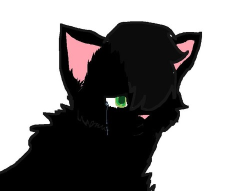 Hollyleaf's pain