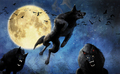 Werewolf  - mythical-creatures photo