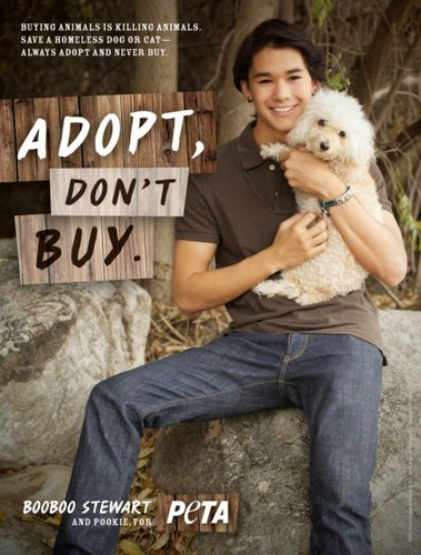 Boo Boo Stewart wallpaper entitled boo boo stewart