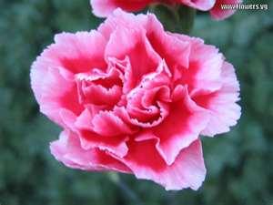 january fleur