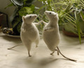 mice can dance??