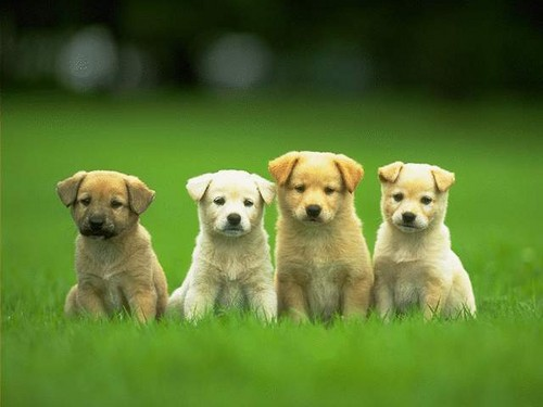 Dancing Little Animals Images Puppies Wallpaper And Background