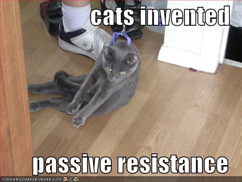 Katzen invented passive resistance