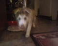 My dog, Shadow. - fanpop-pets photo