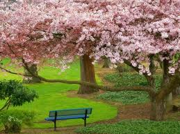 Mother Nature wallpaper with a park bench, a live oak, and a beech entitled Anywhere Beauty Can Rise