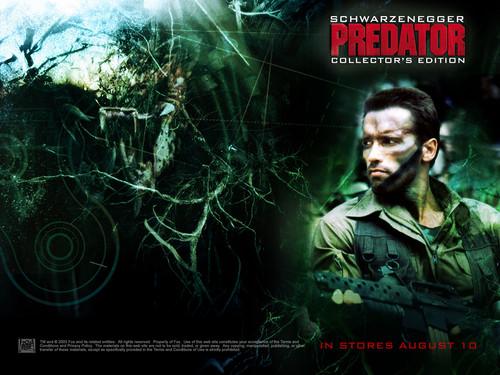 Arnold Schwarzenegger fondo de pantalla