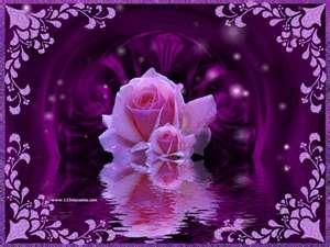 ponk rose