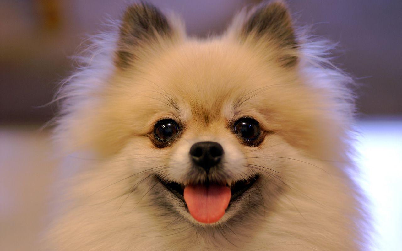 תמונות של כלבים