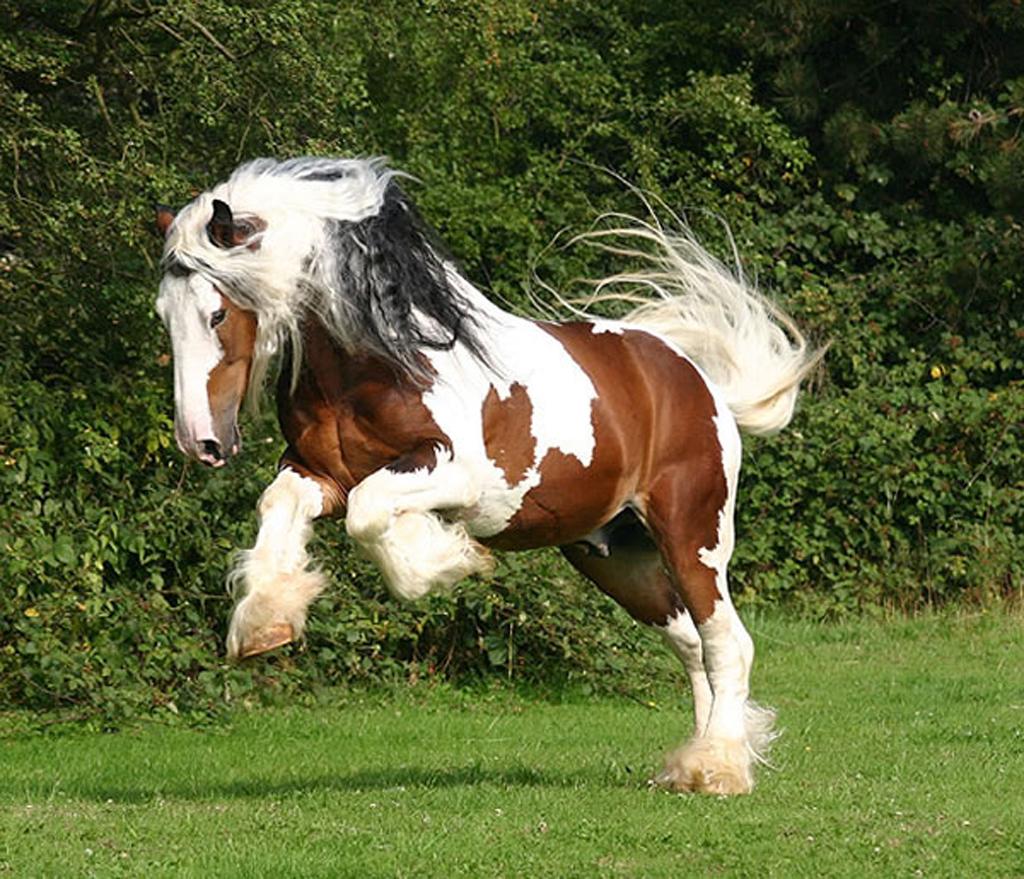 pony pferd