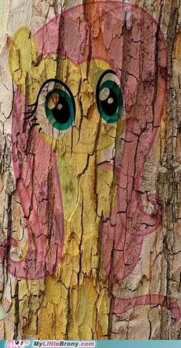 Fluttershy IS a pokok