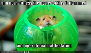 Random wallpaper called Funny Hamsters