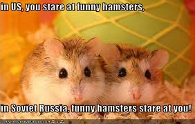 Funny Hamsters