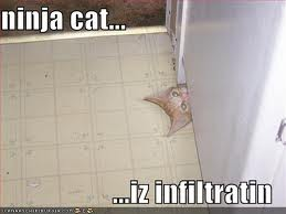 Ninja Cat Funnies