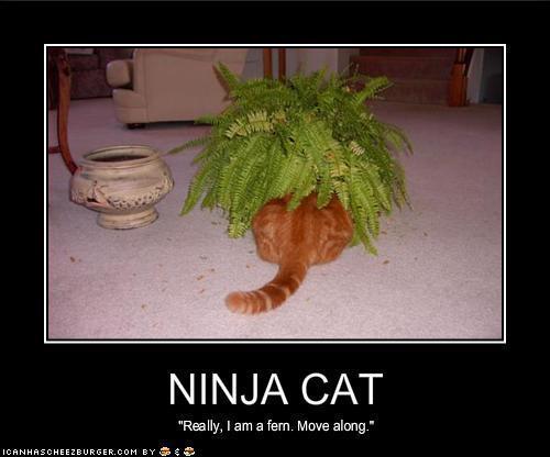Ninja Cat Funnies