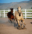 horses - horses photo