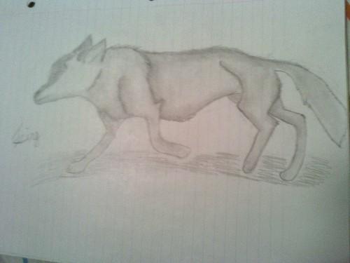 my волк