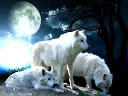 the Anubian's wolf pack wallpaper possibly containing a white wolf called wolf