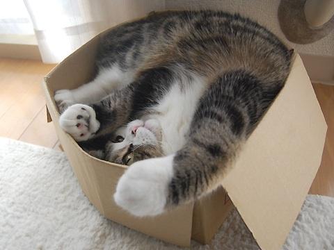 Adorable Kitties <3