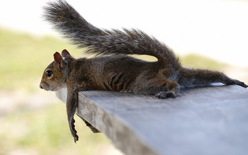 Animal Humor wallpaper containing a squirrel titled Funny Animals
