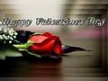 Happy Valentine's day Berni - yorkshire_rose wallpaper