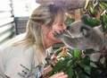 Koala Bears 11/11