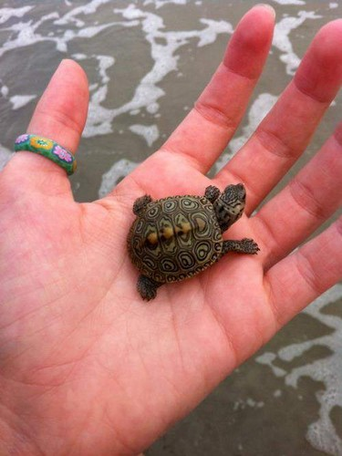 Tiny Turtle - turtles Photo