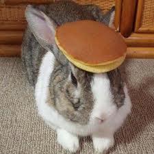 pancake rabbit