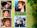 shinee for ever - shinee wallpaper