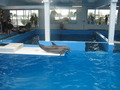 ☆ Winter - dolphin-tale photo