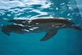 ☆ Winter - dolphin-tale photo