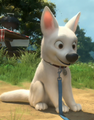 Cute Bolt - disneys-bolt screencap