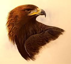 Golden Eagle Print