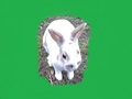 My Pet Rabbit Waffle - fanpop-pets photo