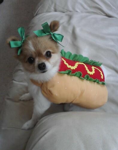 My dog, Lilly!