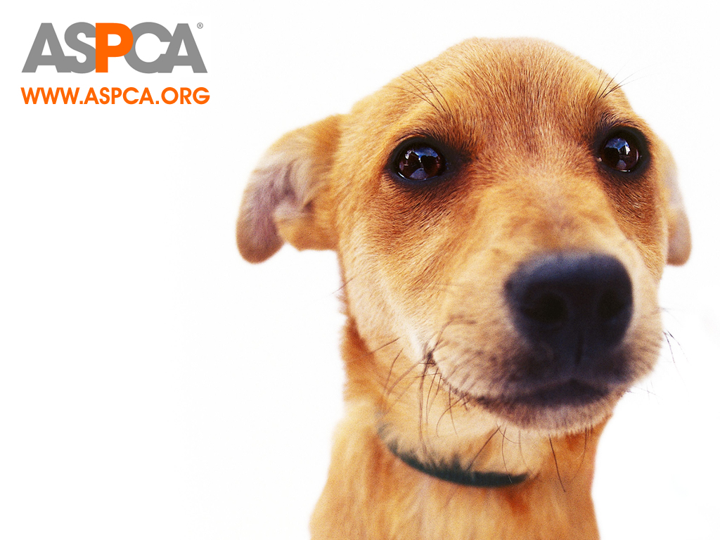 Why donate to the aspca