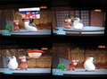 Sneak Peak TMDGN: Skilene parts - penguins-of-madagascar screencap
