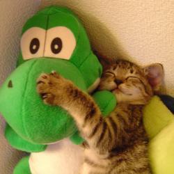 Yoshi and cat